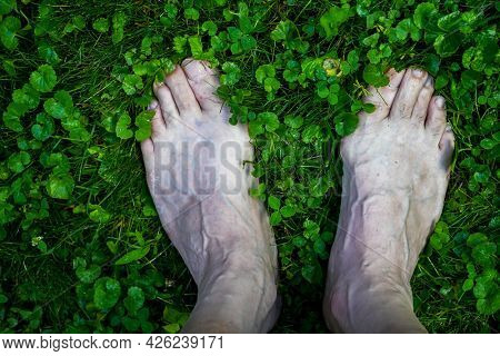 Bare foot outside  on wet fres green grass