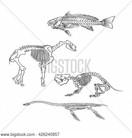 Set Of Silhouettes Of Skeletons Of Dinosaurs And Fossils. Hand Drawn Vector Illustration. Silhouette