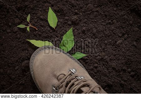 Green Sprout Under The Boot, Broken Tree Sprout, Respect For Nature Concept, Green Peace ,the Boot S