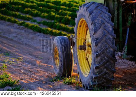 Old farm tractor in field with growing crops and late sunlight