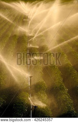 Farm field with sprinklers spraying irrigation water backlit by sunlight