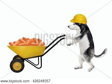 A Dog Husky Builder In A Construction Helmet Pushes A Wheel Barrow Full Of Red Bricks. White Backgro