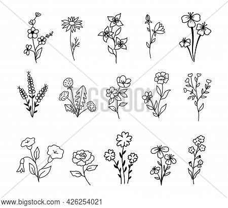 Wildflowers And Flowers Collection, Drawing, Line Art, Vector Illustration. Set Of Isolated Plants I