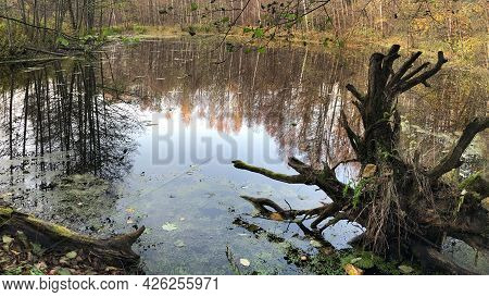 Uprooted Tree Is Flooded In The Lake. The Snag Lies On The Shore Of The Lake Partially Submerged In