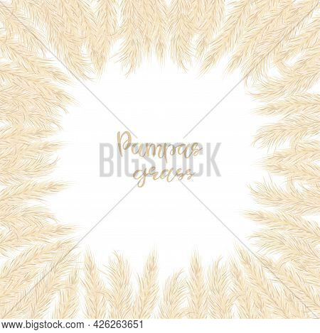 Dry Pampas Grass Frame. A Place For Text, A Place For Copying. Vector Illustration. Decor. Vector Il