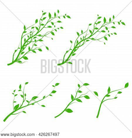 Set Of Green Tree Branch. Branch Silhouette Isolated On White Background With A Lot Of Leaves. Vecto