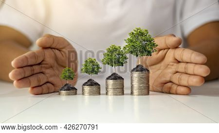 Trees Growing On Stacks Of Coins And Placing Coins From Low To High Are Like Saving Money To Add Mon