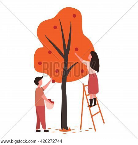 People Pick Fruit In The Garden Or On The Farm. The Farmer Collects Fruits In The Fall. Harvesting C