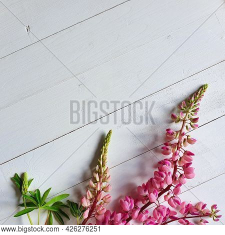 Pink Lupins On A Vintage White Wooden Background. Top View Of Lupine Flower Frame. Cosmetics Product