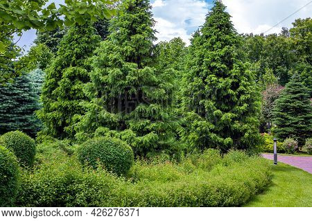 A Dense Pine Park With Thorny Trees And Bushes With Green Grass Park Landscape With Ground Lantern I