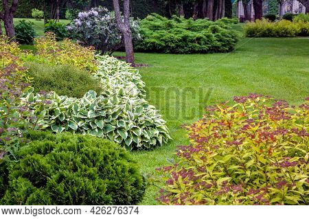 Garden Bed With Bushes And Meadow Grass Landscaping With Plants For Backyard Decor In Spring Season