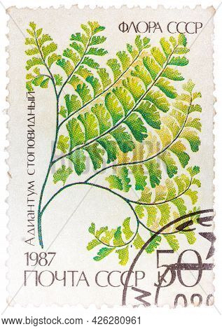 Ussr - Circa 1987: A Stamp Printed In The Ussr Shows Maidenhair, Circa 1987.