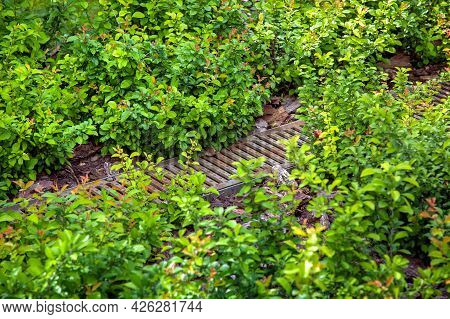 Drainage Grid In The Landscape For The Drainage Of Rainwater In The Deciduous Garden Bed With Tree B