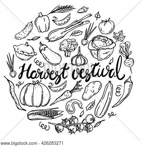 Vector Illustration Of The Harvest Festival. A Set Of Autumn Vegetables. Corn, Squash, Carrots, Beet