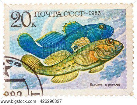 Russia - Circa 1983: Stamp Printed By Russia, Shows Fish, Neogobius Fluviailis, Circa 1983