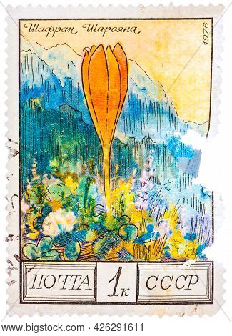 Ussr - Circa 1976: Stamp Printed By The Soviet Union Post Shows Sharoyans Saffron, Circa 1976