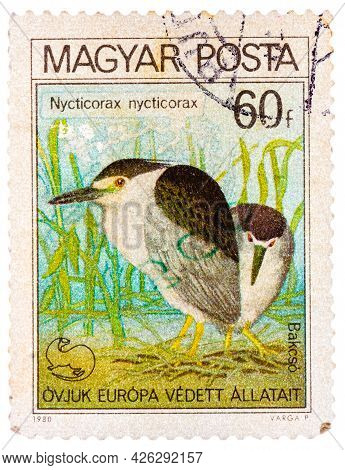 Hungary - Circa 1980: A Stamp Printed In Hungary Shows Black-crowned Night Heron, With The Inscripti