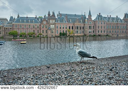 Seagull and the Binnenhof House of Parliament and the Hofvijver lake. The Hague, Netherlands