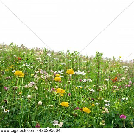 Yellow Flowers Of Wild Buttercup And Wildflowers On Meadow In Summer On White Background. Butterflie