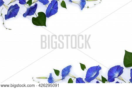 Frame Of Blue Flowers Ipomoea ( Bindweed, Moonflower, Morning Glories ) On A White Background With S