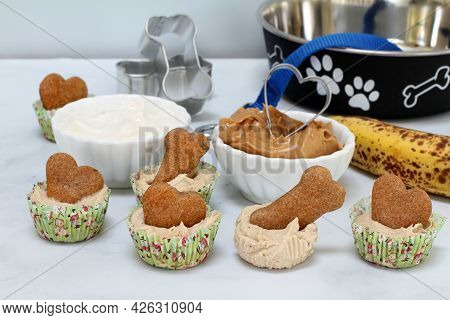 Homemade Frozen Dog Ice Cream Cupcakes With A Biscuit In The Center.  Yogurt, Banana And Peanut Butt