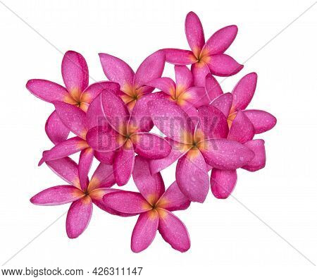 Frangipani Flower With Water Drop Isolated On White Background