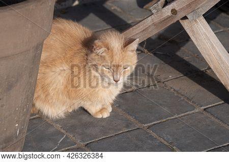 Half Long-haired Beige House Cat Is Hidden Under A Garden Table Enjoying The Sun