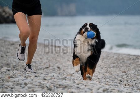 Active Games And Sports With Large Dog On Vacation On Warm Summer Morning. Woman In Sneakers And Sho