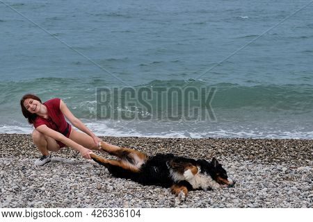 Bernese Mountain Dog On Vacation On Beach Lies And Rests Against Background Of Blue Calm Sea. Young