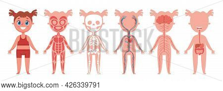 Girl Body Systems. Human Anatomy Skeleton, Muscles, Nerves, Heart And Veins, Digestive Organs. Educa