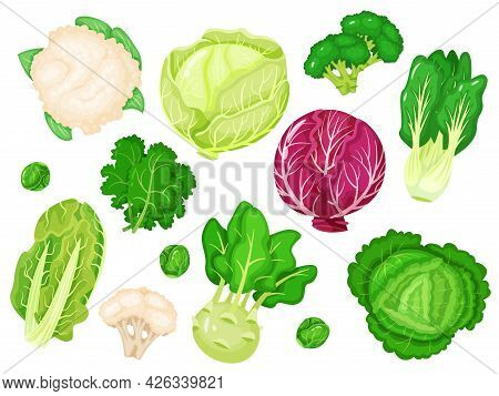 Cartoon Cabbages. Fresh Lettuce, Broccoli, Kale Leaves, Cauliflower, White And Red Cabbage. Various