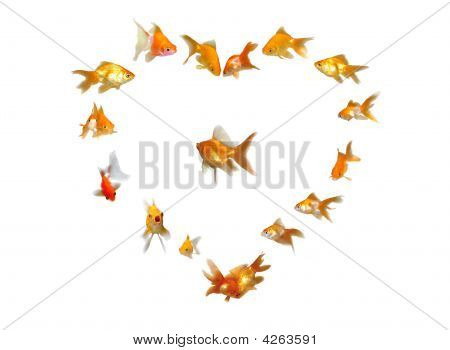 Goldfishes Set (Heart Shaped Frame Background)  Many beautiful goldfishes isolated on white background (can be used individually) poster