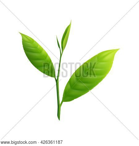Green Matcha Tea Leaves On White Background Realistic Vector Illustration