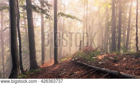 Sunrise In A Foggy Forest. Sunlight Rays In Autumn Forest. Mala Fatra, Slovakia.