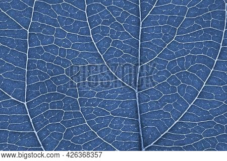 Leaf Of Fruit Tree Close-up. Blue Tinted Mosaic Pattern Of A Net Of Veins And Plant Cells. Abstract