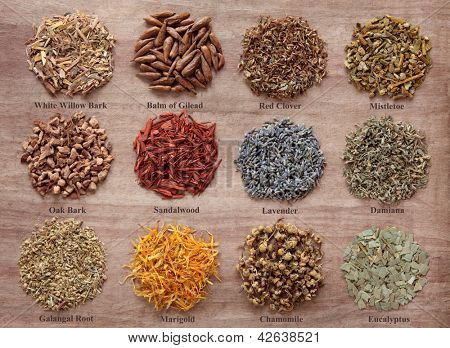 Medicinal herb selection also used in magical potions over papyrus background. Titles provided.