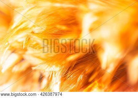 ฺabstract Feather Fluffy Brown Nature Blur Background. Tenderness, Fragile, Gently, Gentle, Clean, S