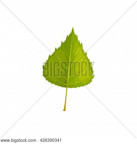 Leaf Of Birch Tree, Autumn And Fall Vector Isolated Leaf Icon. Birch Tree Foliage, Forest And Plants