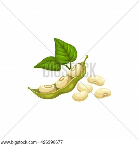 Soy Or Common Bean Pods With Green Leaves And Heap Of Beans Isolated Natural Food. Vector Raw Vegeta