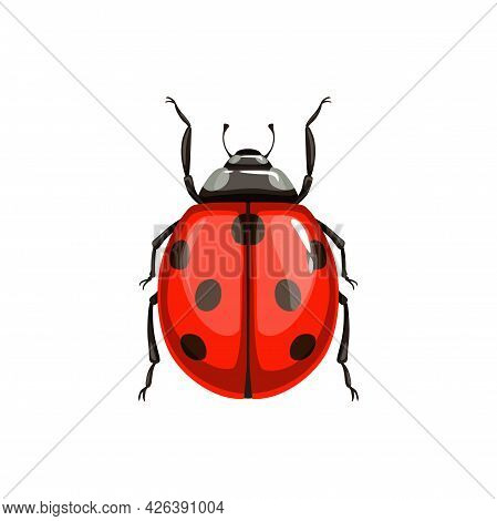 Ladybug Beetle, Insect Parasite Bug Pest Control And Agriculture Disinsection Service, Isolated Vect