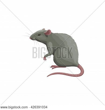Rat Icon, Pest Control Extermination, Deratization And Disinsection Service, Isolated Vector. Rat Ro