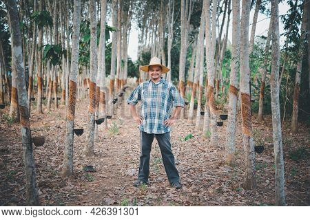 Farmer Agriculturist Rubber Tree Plantation
