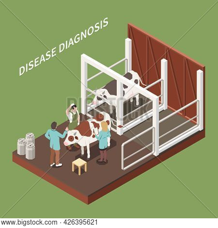 Veterinary General Clinical Cattle Exam And Diagnosis Isometric Composition With Vet Conducting Ill