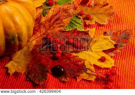 Autumn Art Composition - Varied Dried Leaves, Pumpkins, Fruits, Rowan Berries On Red Background. Aut