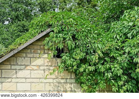 Old Brown Brick Attic Of A Rural House With A Small Broken Window Overgrown With Green Vegetation On