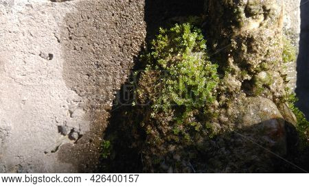 Mossy Walls, Damp Walls Overgrown With Green Grass Or Moss