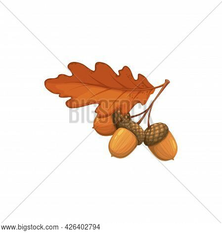 Oak Leaf With Acorn, Autumn And Fall Vector Isolated Icon. Oak Tree Foliage, Yellow Dry Leaf With Ac