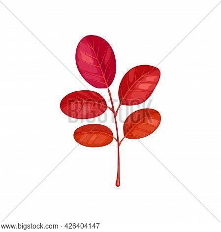Autumn Acacia Leaf Vector Icon, Cartoon Foliage, Fallen Tree Leaf Of Red Color, Design Element Isola