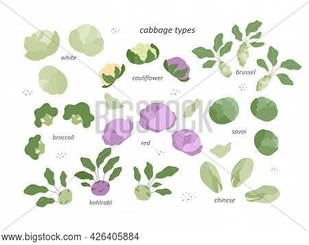 Set - Types Of Cabbage. The Set Includes White And Red Cabbage, Broccoli, Cauliflower, Brussels Spro