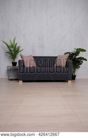 Modern Sofa And Plants With Copy Space Over Concrete Wall Background